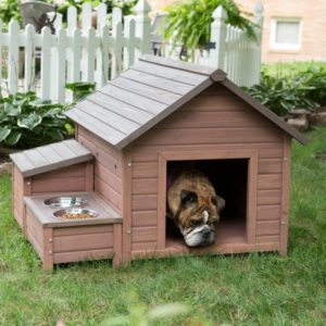 Provide water and shelter for dog in garden