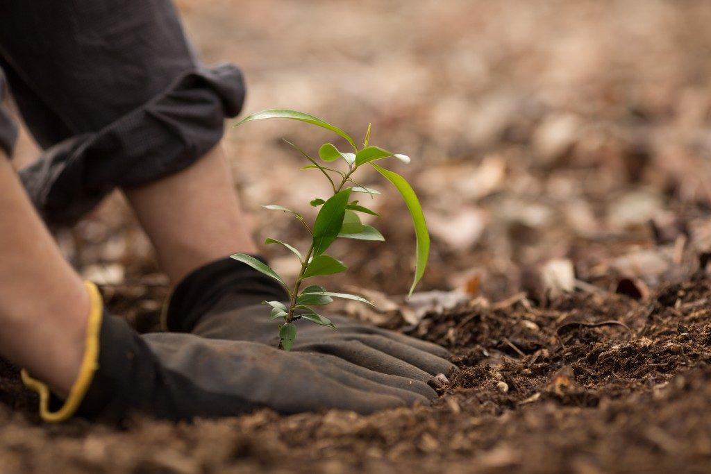 Man planting the tree