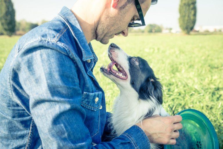 pet dog looking at his master