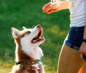 Dog motivational training