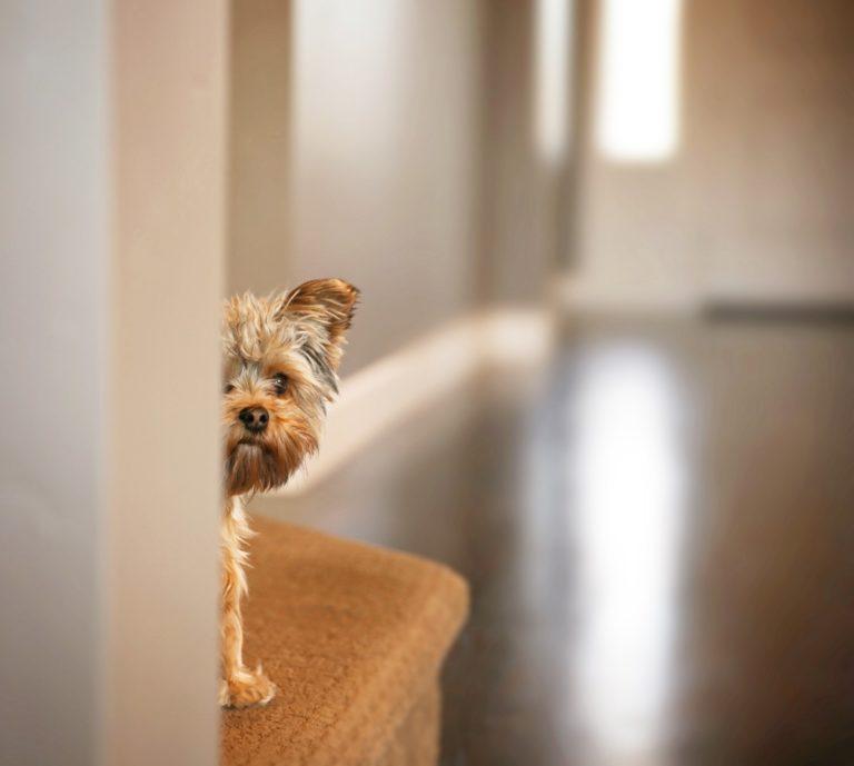 Small dog peeking