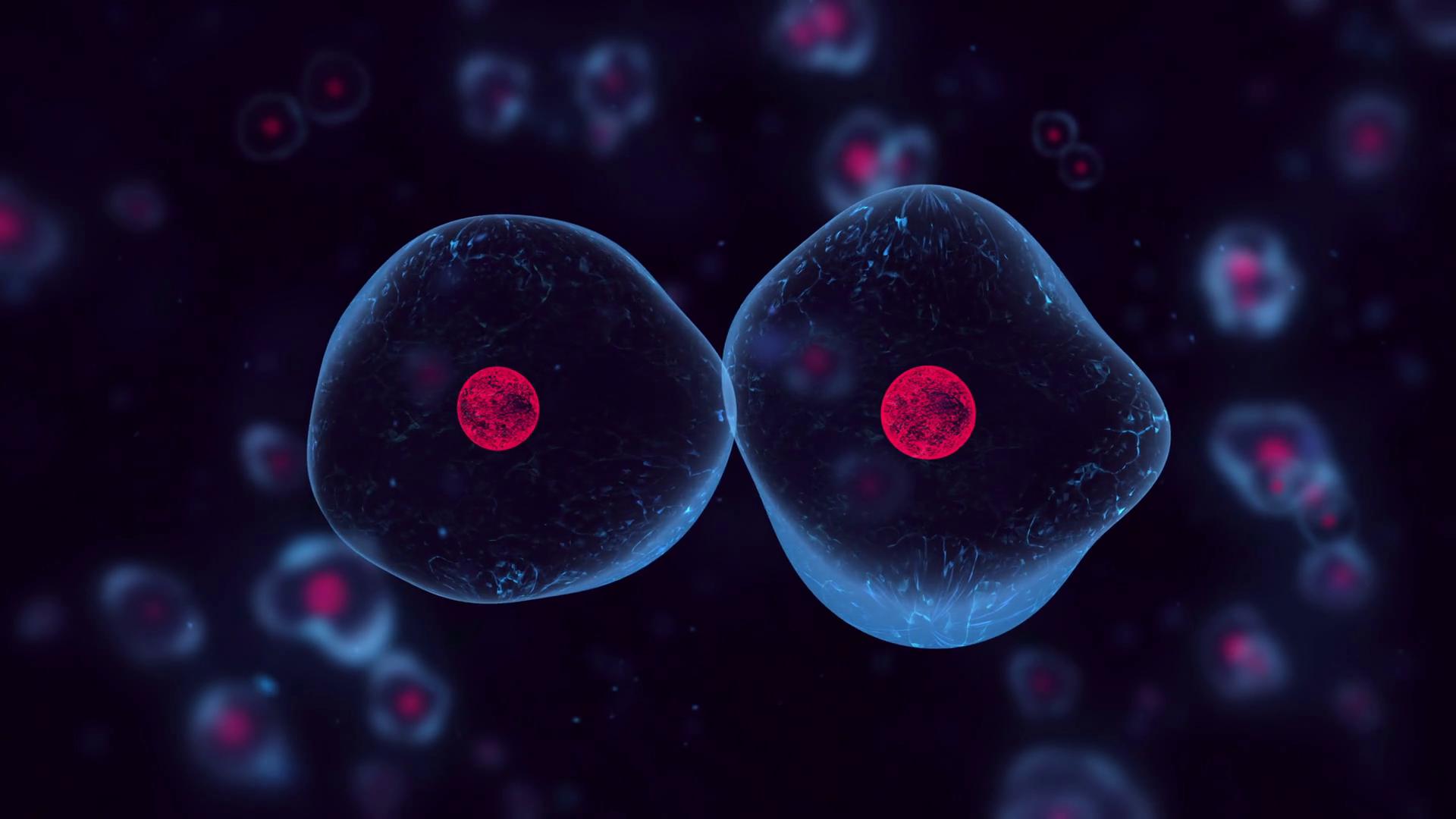 animal: animal cell hd image
