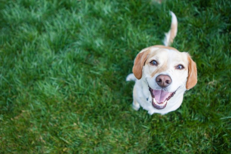 a dog smiling upward