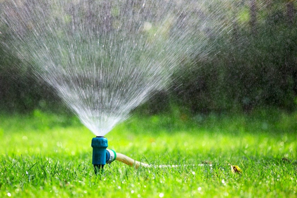 Sprinkler watering the grass