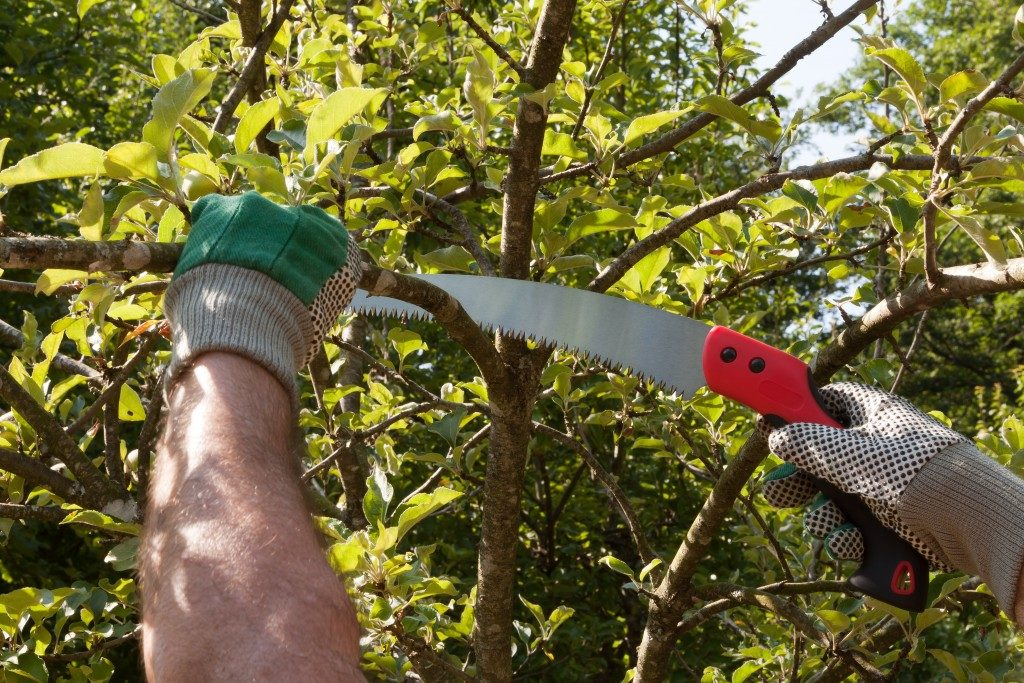 cutting tree branches
