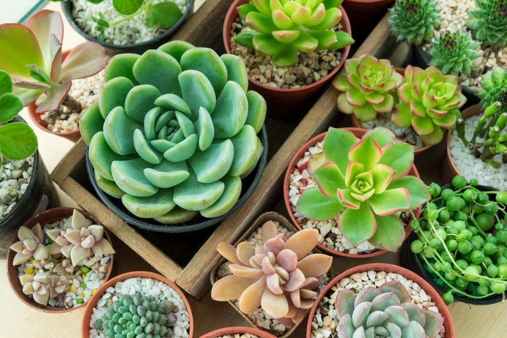 potted succulents in a box