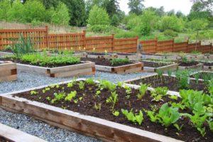 garden vegetable boxes